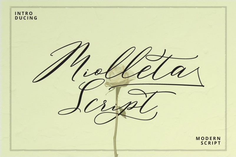 Miolleta Calligraphy Font Free Download [Direct Link]